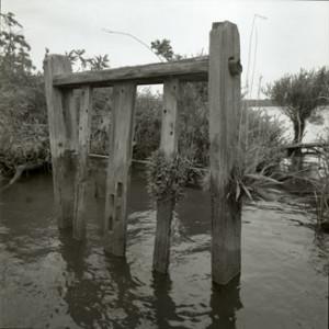 Rice Trunk, 2001