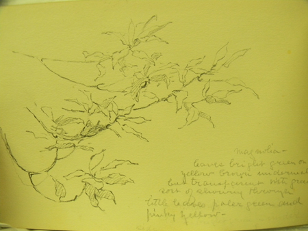 Magnolia Leaves from an Alice Ravenel Huger Smith sketchbook, ca. 1920s, by Alice Ravenel Huger Smith (1876–1958)