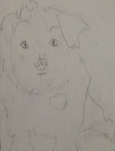 Pencil sketch of a dog, 2013, by Lese Corrigan