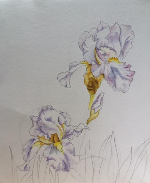 Irises in watercolor by Brenda Bogren