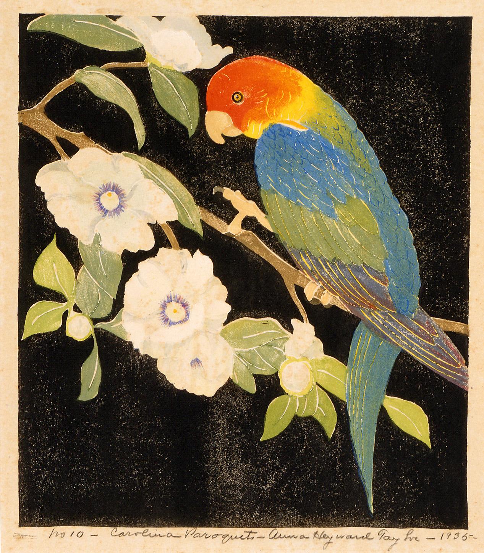Carolina Paroquet, 1935, by Anna Heyward Taylor