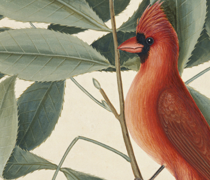 Artist, Scientist, Explorer: Mark Catesby in the Carolinas