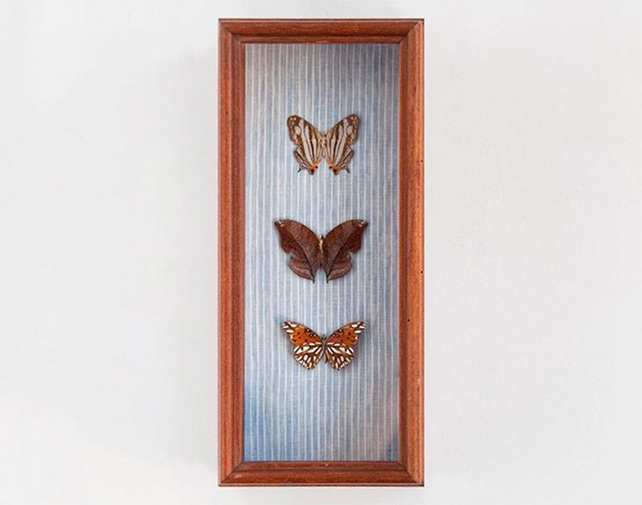 Butterfly Box made for Indigo and Cotton<br>Photo by Brett Carron