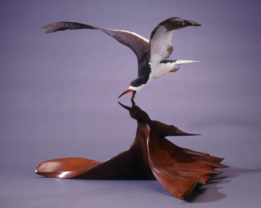 <i>Black Skimmer</i>, 1983, By Grainger McKoy (American, b. 1947), Basswood, walnut, polychrome and oil. On loan courtesy of The Rivers Collection. Image courtesy of the artist.